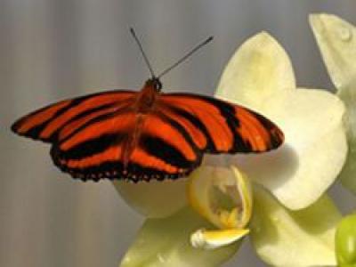 Der Schmetterlingsflug